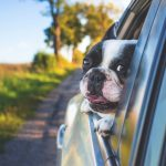 What is the Frequent Pet Traveler Program?