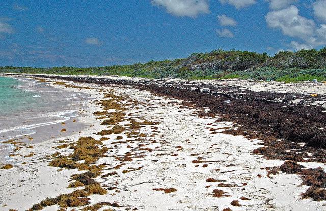 Sargassum Playa del Carmen