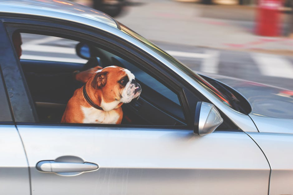 Frequent Pet Traveler Program Top Mexico Real Estate
