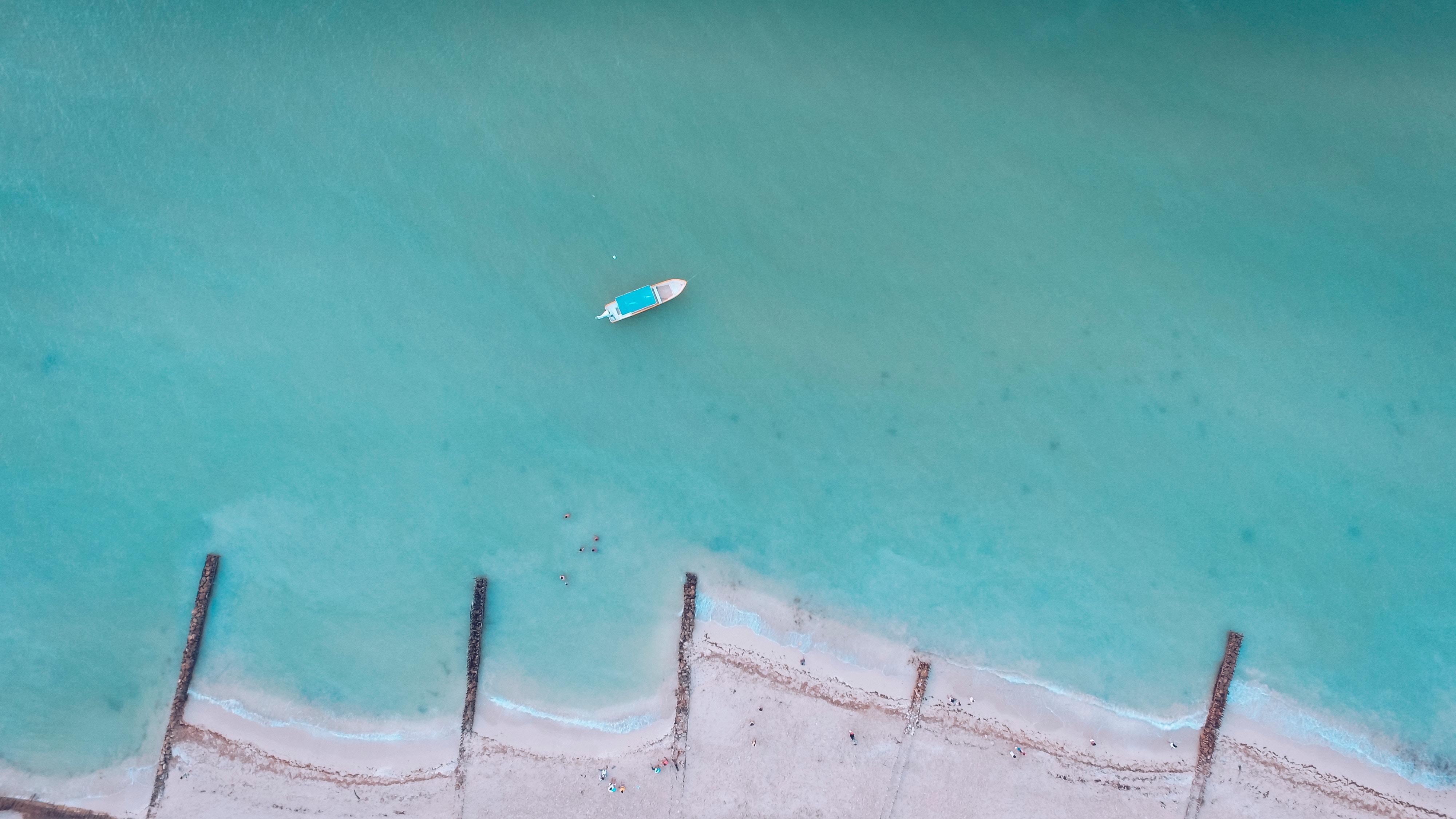 Whale-shark Yucatan
