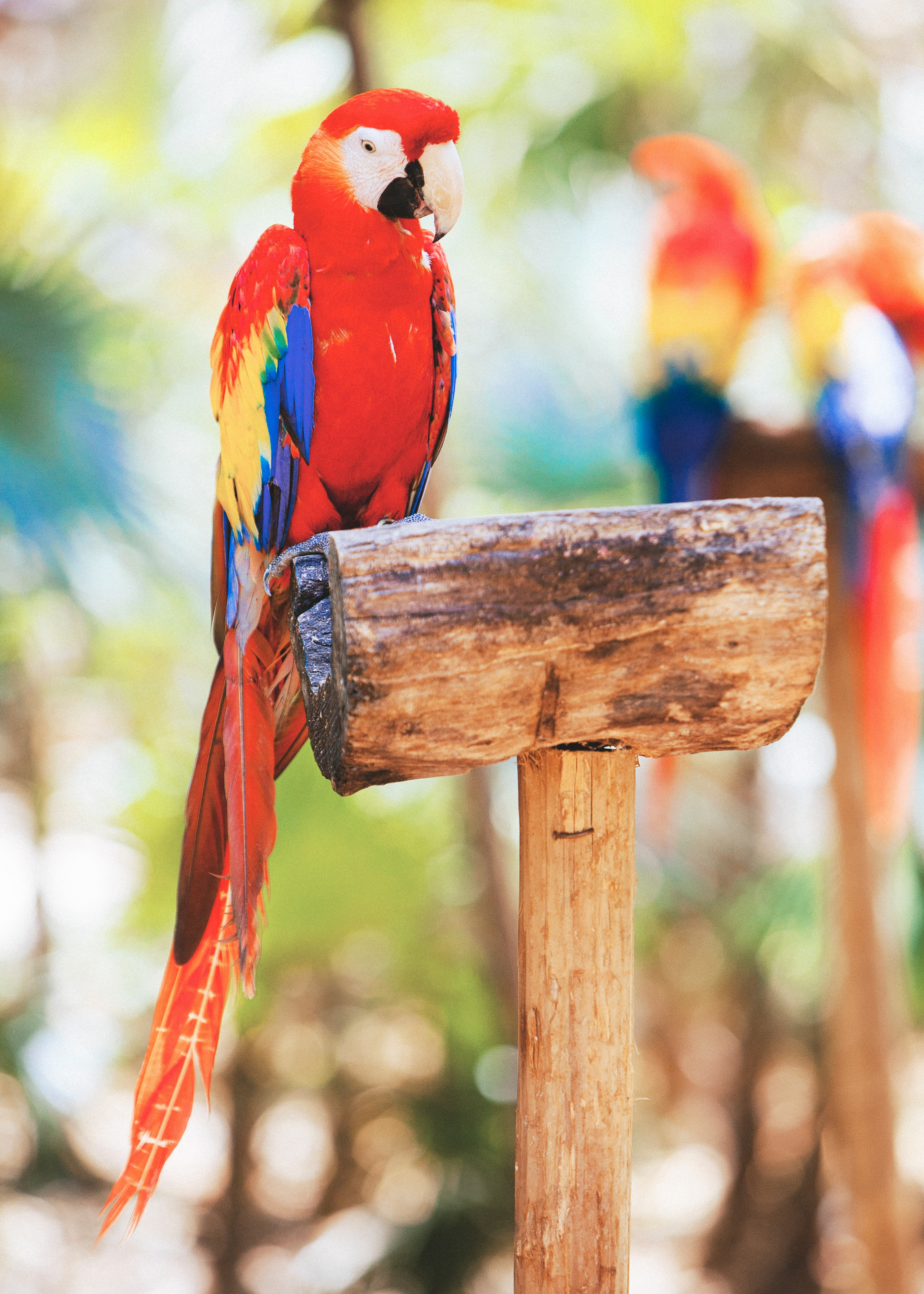 Ecopark Xcaret Macaw